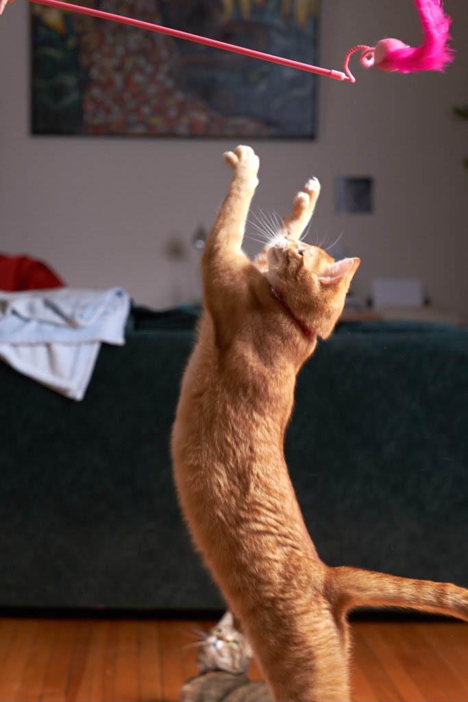 Francine_yoga_nature__DSF0589_17-01-291.jpg