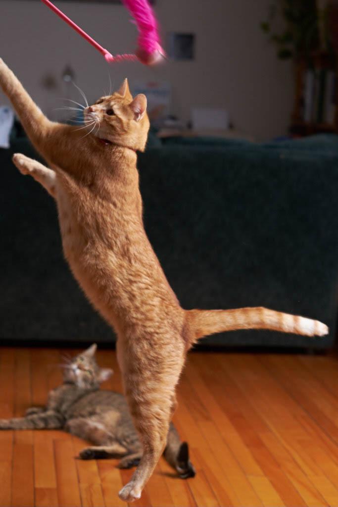 Francine_yoga_nature__DSF0595_17-01-291.jpg